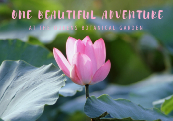 Sharing our latest adventures in and around NYC - and loads of beautiful pics too! This week we're on a beautiful adventure at the Queens Botanical Garden